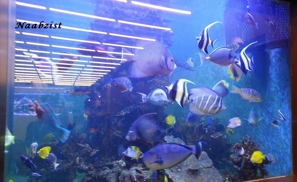کاربرد ازن در پرورش ماهی
